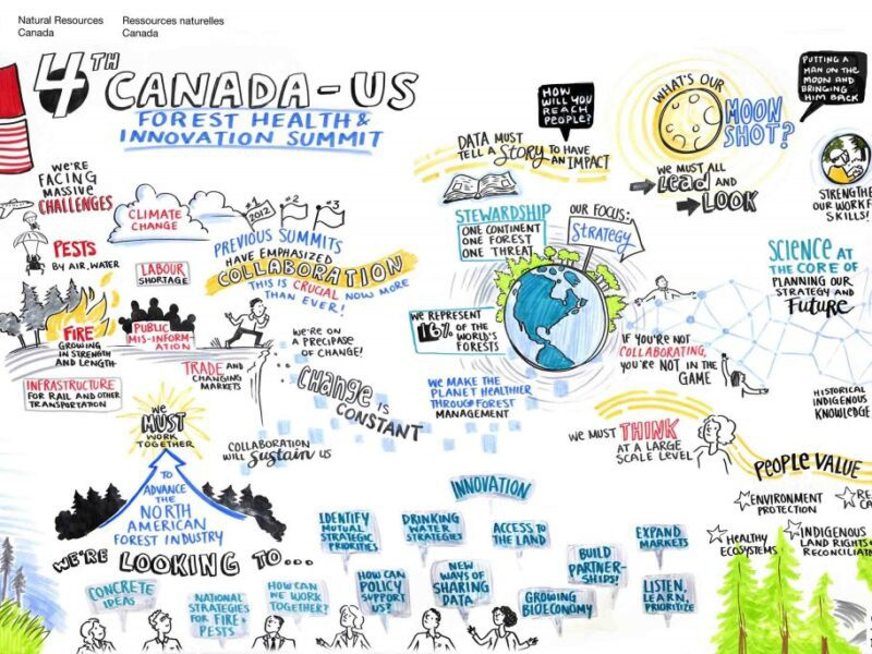 graphic recorder Toronto, graphic recording, live scribing, live illustrator, graphic facilitator Toronto, canada us forest health and innovation summit, forest summit, forestry summit, forest stewardship, forest pests, forest fires, natural resources canada, us forest service, the fuselight creative